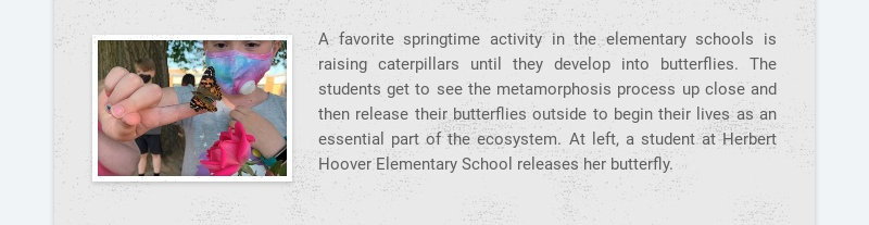 A favorite springtime activity in the elementary schools is raising caterpillars until they...