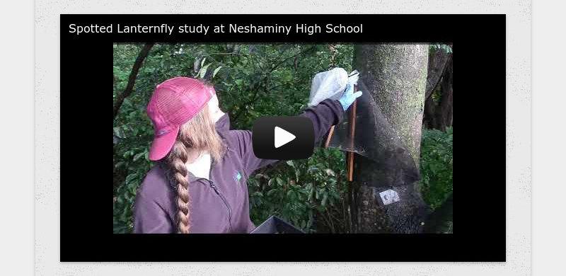 Spotted Lanternfly study at Neshaminy High School